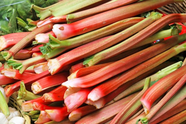 fresh rhubarb stems piled up for sale at a farmer's market